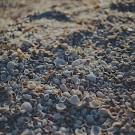 gebroken schelpen isolatie